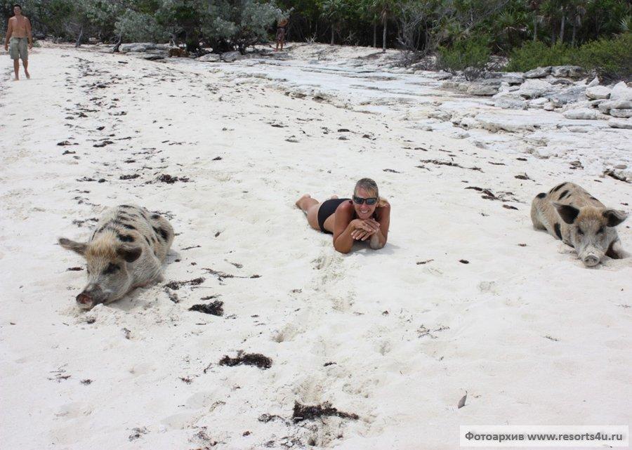 Свиньи на багамском пляже