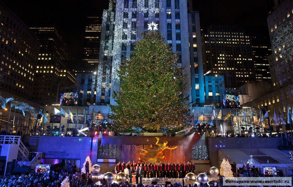 Самая популярная новогодняя елка в США