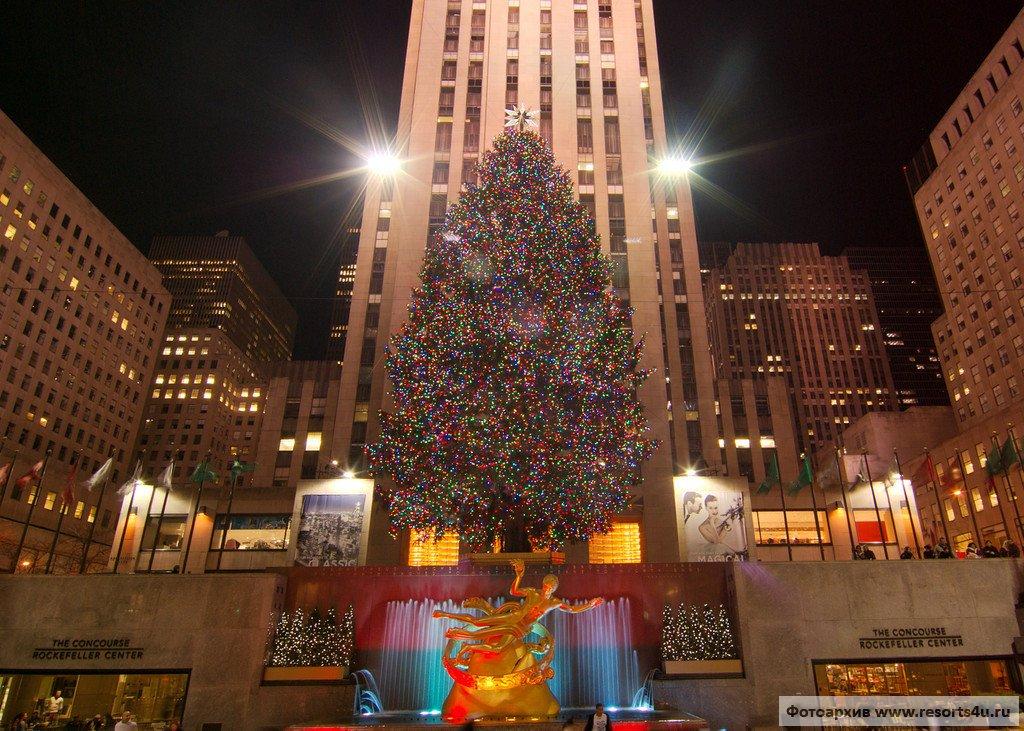 Лучшая рождественская елка Нью-Йорка